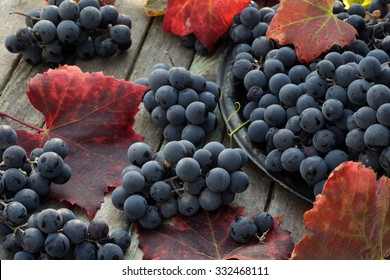 Clusters of red wine grapes with autumn red leaves on wooden background