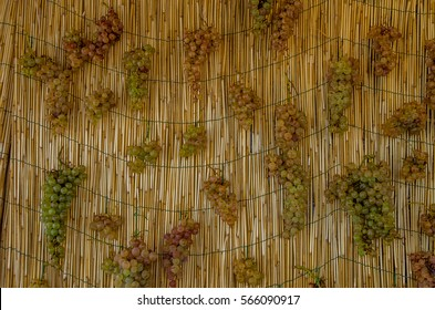 Clusters of white grapes hanging to dry for the production of Vin Santo, a sweet wine to be drunk with desserts