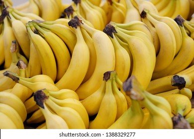 Clusters of yellow ripe bananas in a store laid out in rows in close-up