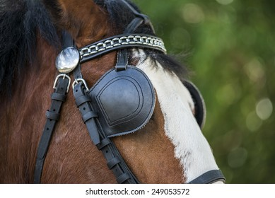 Clydesdale with driving tack details