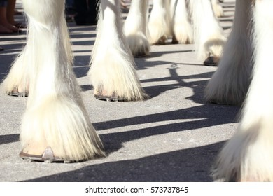 clydesdale feet