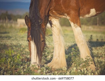 Clydesdale Grazing