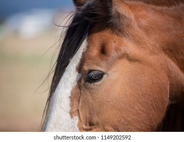 Clydesdale Images Stock Photos Amp Vectors Shutterstock