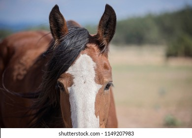 Clydesdale Horse Face