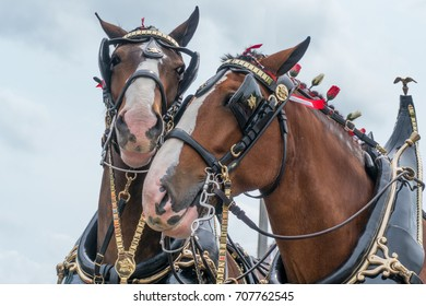 Clydesdale Horse Friends