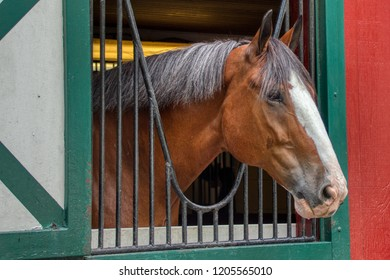 Clydesdale horse in a stall