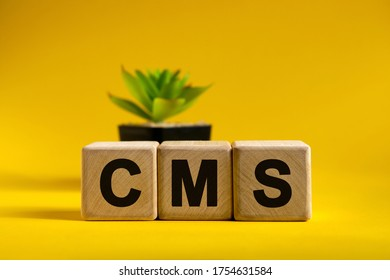 CMS - conceptual text on wooden cubes on a bright background and a pot with a flower behind