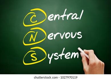 CNS - Central Nervous System acronym, concept on blackboard