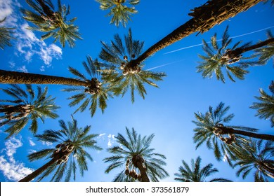 Coachella Palm Trees and Clear Skies