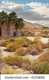 Coachella Valley Preserve; Thousand Palms, California