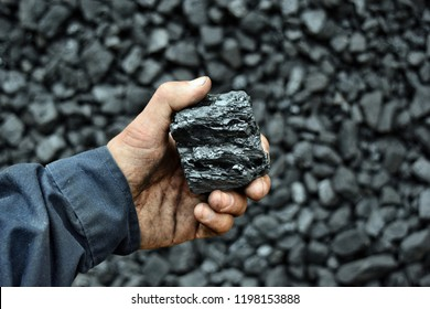 Coal in the hand of worker miner. Picture can be use to idea about coal mining, energy source or environment protection.