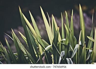 Coarse grass in the sunshine
