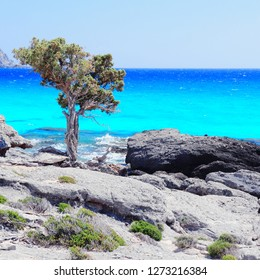 Coast of Crete island in Greece. Rocky beach Kedrodasos near famous Elafonisi (or Elafonissi) with old juniper tree.
