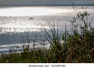 Coast with grass and Baltic sea. Landscape of Baltic sea coast with shimmering water. Long grass on the seashore in Latvia. Baltic seas coast overgrown with the grass.