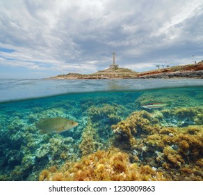 Coast with a lighthouse and fish with algae underwater, split view half above and below water surface, Mediterranean sea, Cabo de Palos, Cartagena, Murcia, Spain