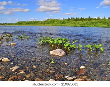 The coast North of the river in the summer. River Kokpela, Polar Ural, Komi Republic, Russia.