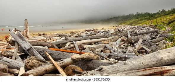The coast of the Pacific Ocean after the storm in the foggy morning. Logs and driftwood on the Tofino beach. Pacific Ocean. British Columbia, Canada