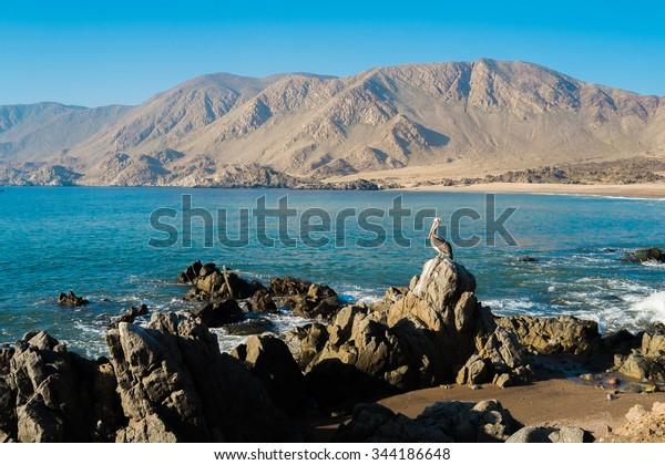 Coast in Parque Nacional Pan de Azucar, Chile