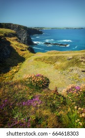 Coast path between trevone and padstow cornwall england uk.