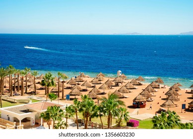 Coast of the Red Sea, resort beach with palm trees in Sharm El Sheikh, Egypt.