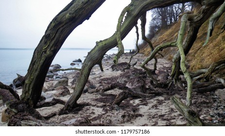 Coast, Stevns, Denmark