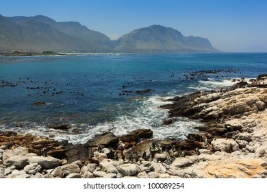The coast at Stony Point African Penguin Colony near Betty's Bay, Western Cape, South Africa.
