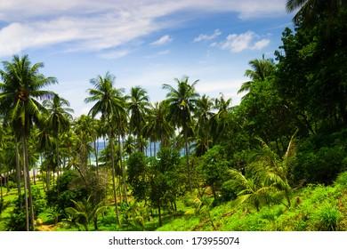 Coast Under Palms