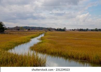Coastal Atlantic marsh in Lewes, Delaware.