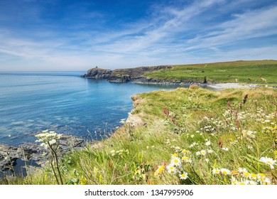 Coastal cliff with blossom flowers at summer. Looking towards Abereiddi Beach in Pembrokeshire, Wales, UK