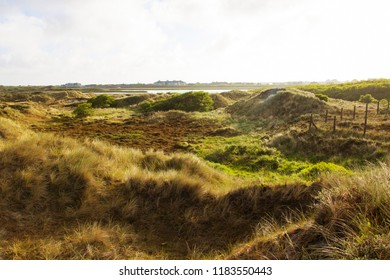 Coastal dune landscape of the North Sea in Germany