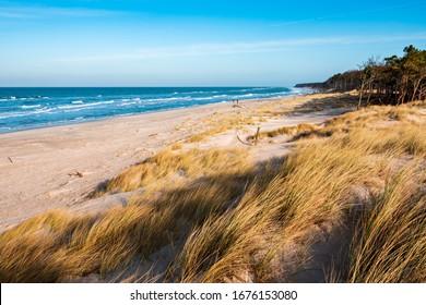 Coastal Dunes by the Baltic Sea, Darss Peninsula, Germany