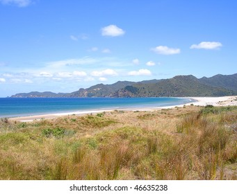 Coastal Grasses in front of Whangapoua Beach, Great Barrier Island, New Zealand