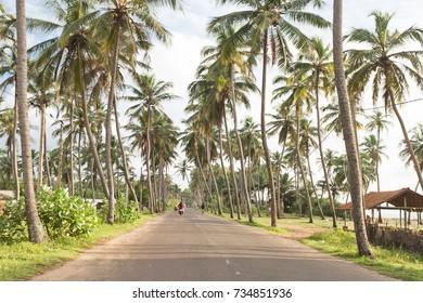 Coastal highway, Marawila, Sri Lanka