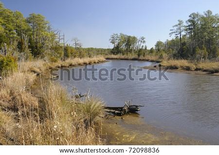 pamlico river marsh