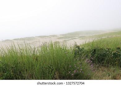 Coastal landscape with sea grass near a sandy beach