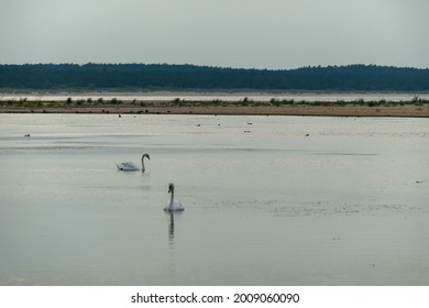 The coastal line of a sandy beach by the Baltic Sea on Sobieszewo island, Poland. There is a small pond separated from the sea by sand dunes with two swans swimming across it. A bit of overcast.