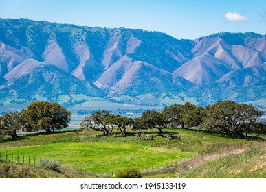 Coastal live oak trees grow in the foothills of Salinas Valley, in Monterey County, California, with the Santa Lucia Mountain range in the background.