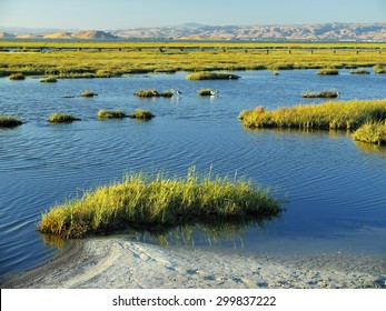 Coastal marsh land in San Francisco Bay at high tide. This photo was taken near sunset at Baylands Nature Preserve in Palo Alto, California.