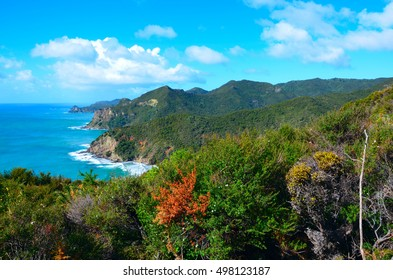 Coastal Path and cliffs in Great Barrier Island, New Zealand