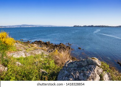 Coastal rocks and grass vegetation in Neixon point, Boiro town,  with Arousa estuary at background
