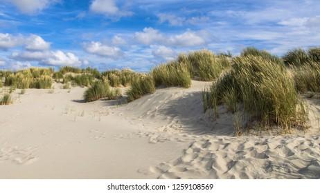 Coastal sand dunes landscape on dutch Wadden island