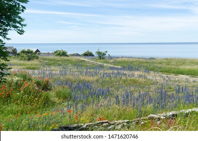 Coastal summer view with red and blue flowers at the island Oland in Sweden