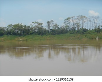 Coastal vegetation reflected in the water of the Wood River, in Amazonas, Brazil