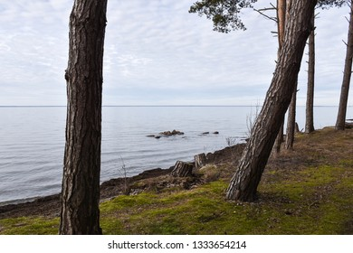 Coastal view with tree trunks by calm water at the coast of the swedish island Oland in the Baltic Sea