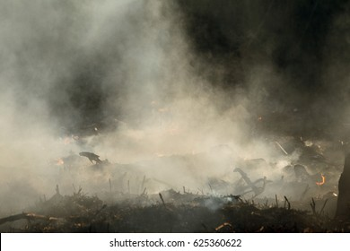 coastal zone of marsh creek, strong smoke from fire of liana overgrowth. Spring fires of dry reeds dangerously approach houses of village by river Cleaning fields of reeds, dry grass. Natural disaster