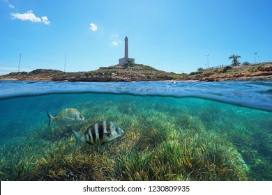 Coastline with a lighthouse at Cabo de Palos in Spain and grassy seabed with fish underwater, split view half above and below water surface, Mediterranean sea, Cartagena, Murcia