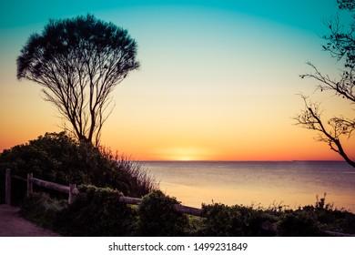 Coastline shrub silhouettes at sunset over ocean