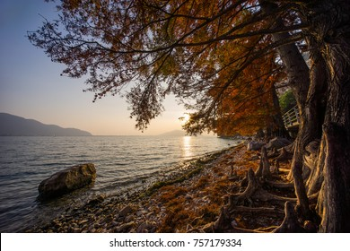 Coastline with unusual roots and trees on Iseo Lake near Riva di Solto, Italy