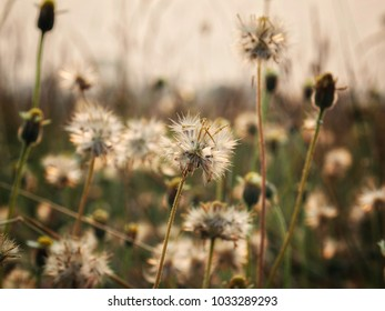 Coat buttonsGrass with sunlight, Silhouette style, use as an illustration or background image.