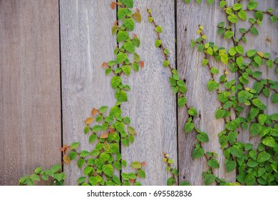 Coatbuttons of Wooden wall
